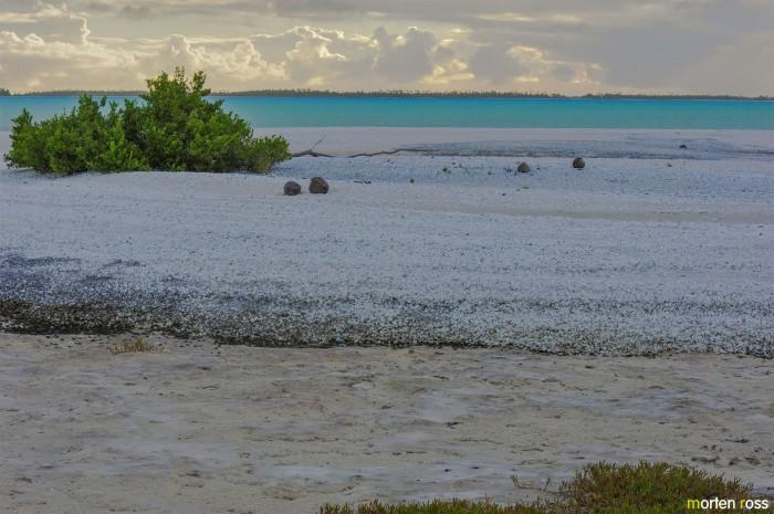 Anaa shell dunes