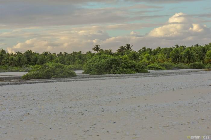 Anaa shell desert