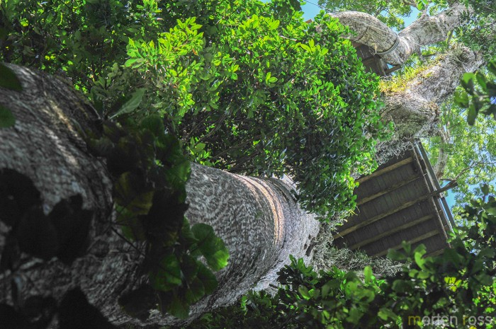 Napo Wildlife Center canopy tower