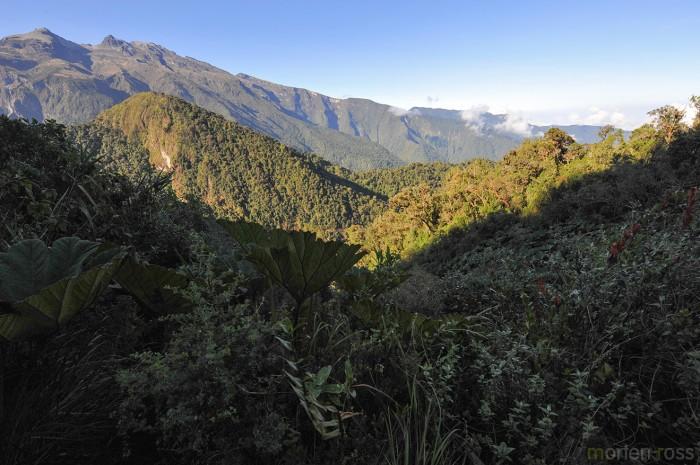 Yanacocha Reserve