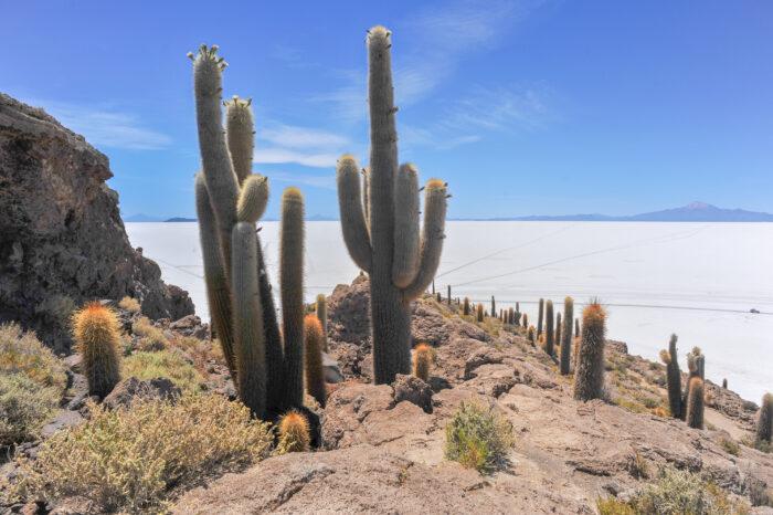 Isla del Pescado (Fish Island) and Salar de Uyuni