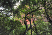 Refugio Los Volcanes, Amboró National Park