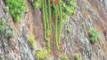 Refugio Los Volcanes Cactus