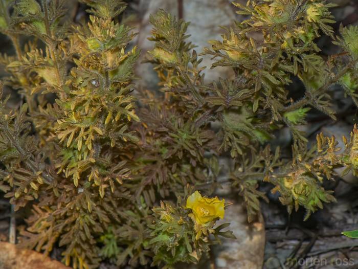 Pantanal plant 03