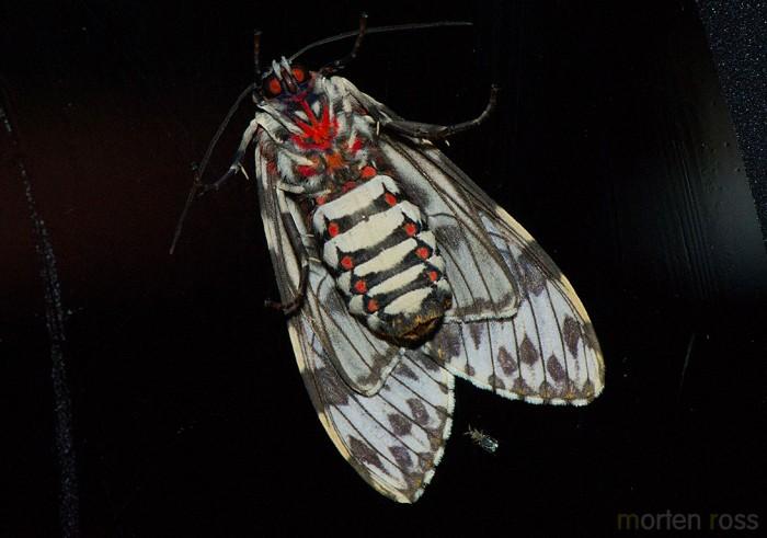 Itatiaia lepidoptera 03