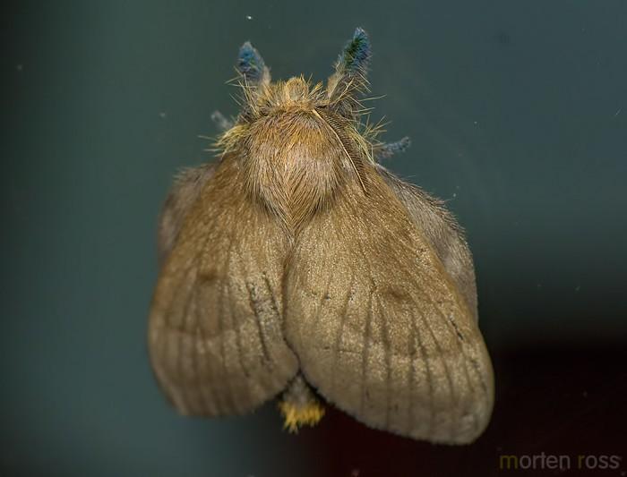 Itatiaia lepidoptera 19