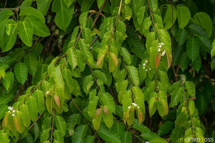 ARCC plant 07
