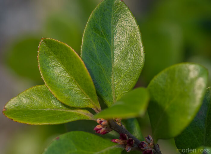 Socotra plant 26