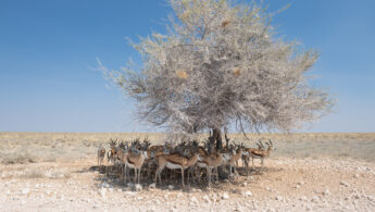 Heatwave and only one tree for shade