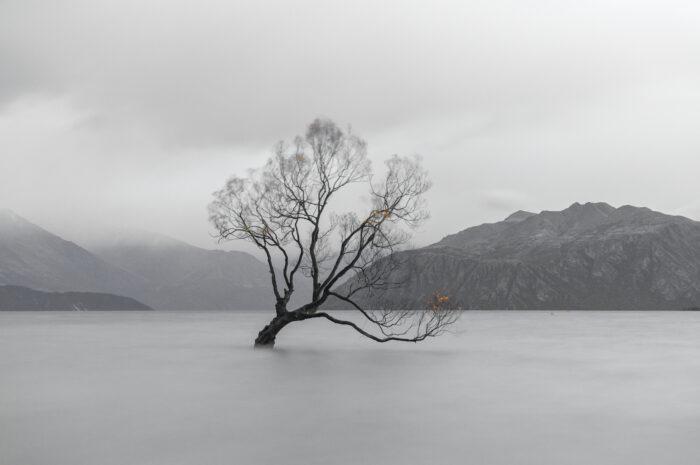 The Wanaka Tree, Lake Wanaka, New Zealand